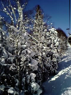新雪だね〜!