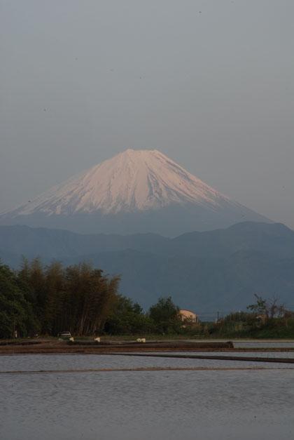 田んぼと富士山