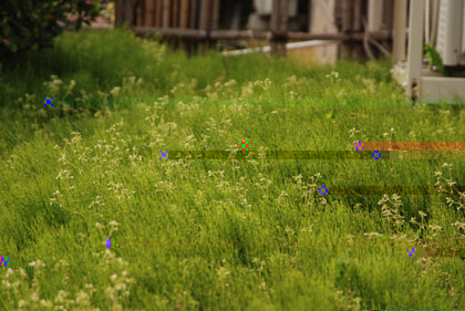 我が家の雑草