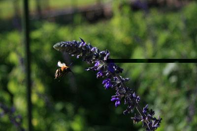 蜂だ!パート2